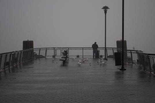 125th Street: Seagull feeding Time
