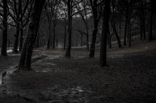 Trees In Riverside park