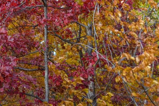 Foliage Delicato-2