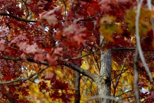 Foliage Delicato-3