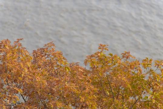 Foliage Delicato