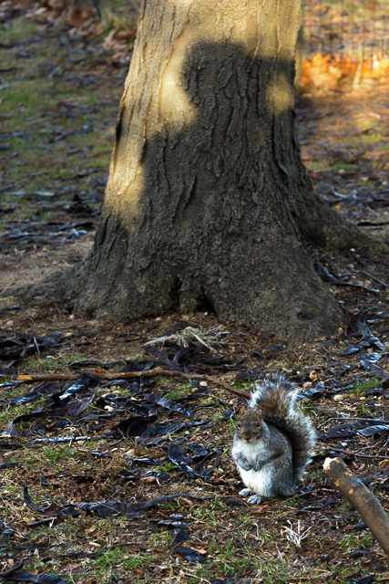 Self Portrait with squirrel