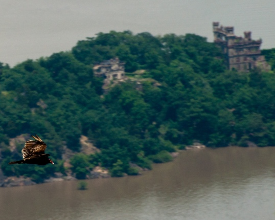 Hawk over Pollepel Island, Fishkill, NY